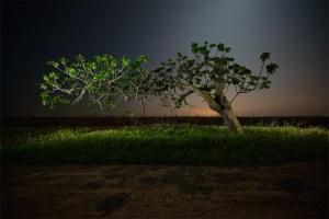 Moonlight Shadow του Pete Prat